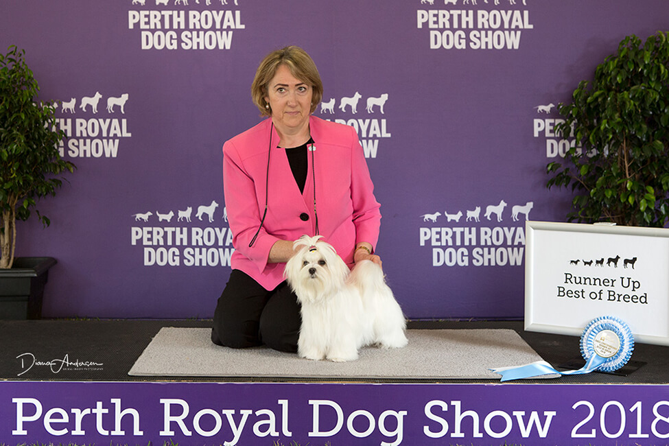 Pinky at the Perth Royal Dog Show 2018