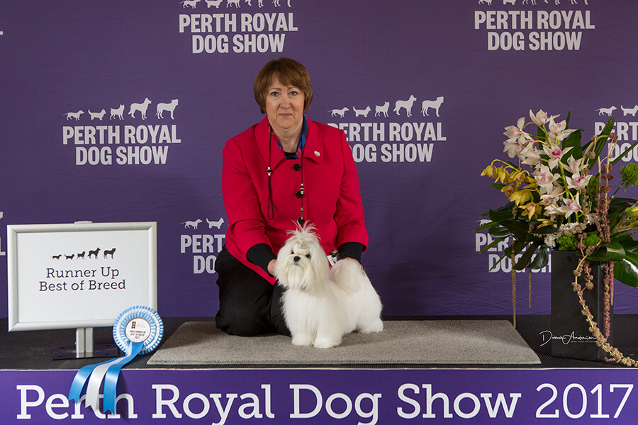 Willi on the podium at the Perth Royal Show 2017
